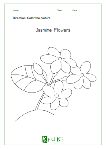 Jasmine Flower Coloring Page